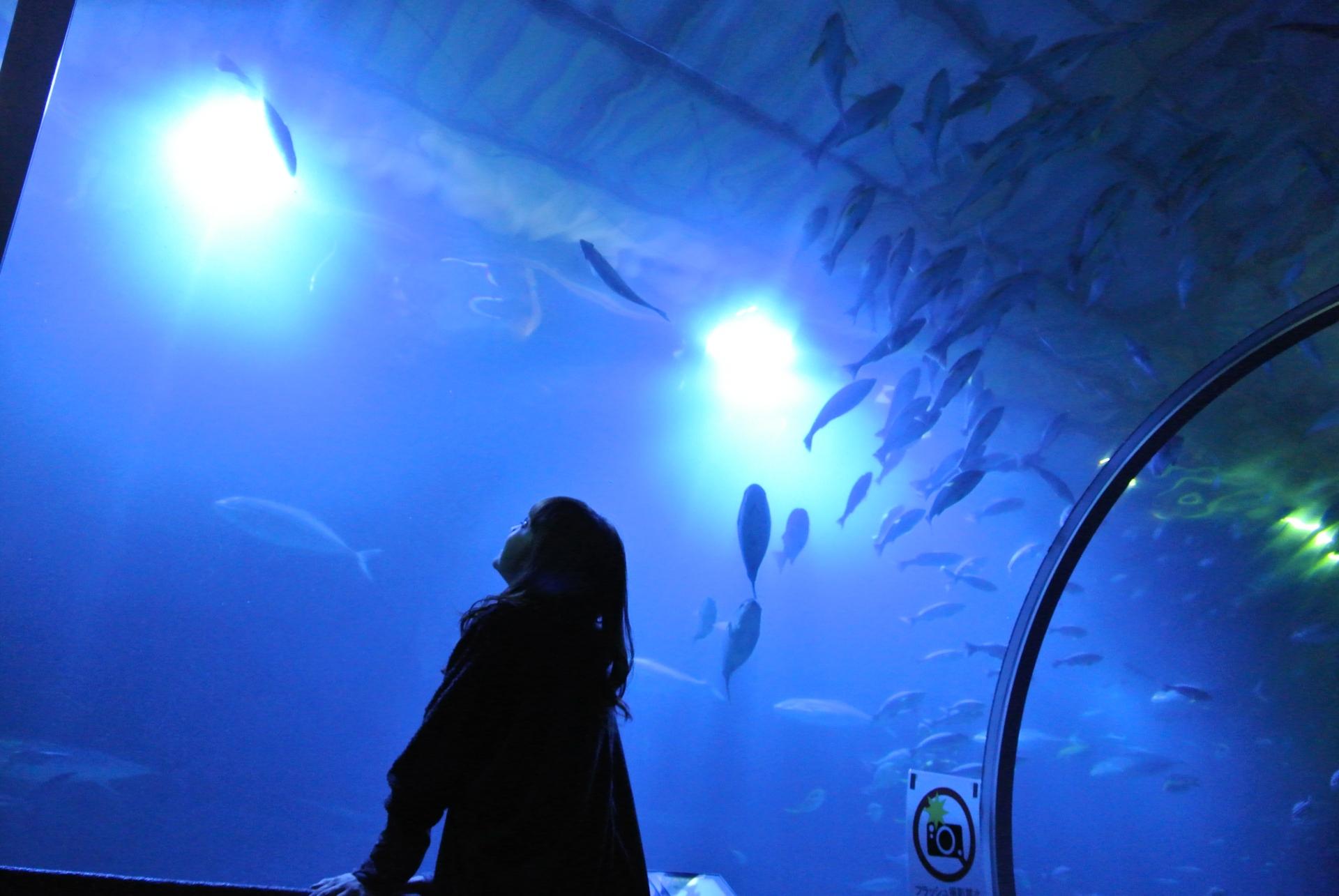 水族館でのデートを楽しんでいる女性
